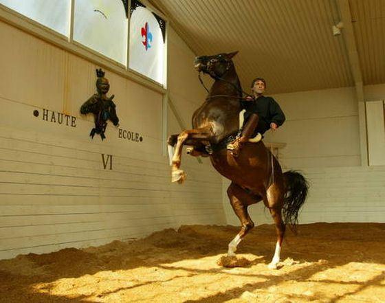 Александр Невзоров и лошади