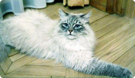 Дорофей, любимый кот Дмитрия Медведева