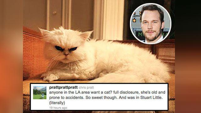 Кошка Криса Прэтта играла в «Стюарте Литтле»