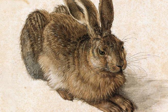 Рисунок Альбрехта Дюрера «Заяц»