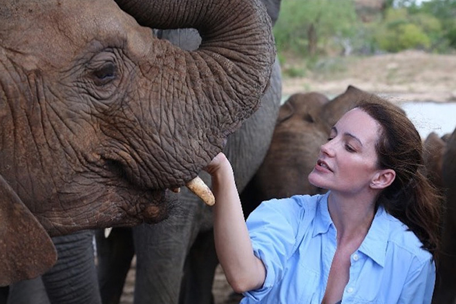 Кристин Дэвис любит слонов