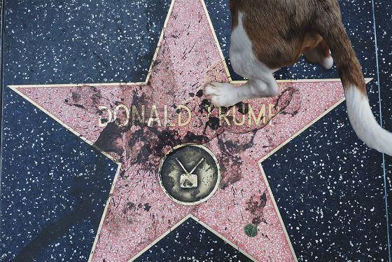 На звезду Трампа многократно покушались вандалы